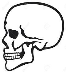 skull tattoo images free human skull profile skull profile side skull royalty free