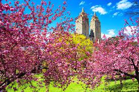 flower places flowers flower sky colors park clouds forces city