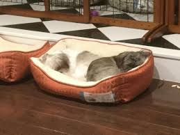 Cats In Dog Beds Harmony Woof Printed Cuddler Dog Bed Petco