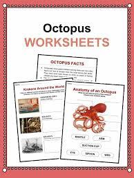 octopus facts worksheets u0026 habitat information for kids