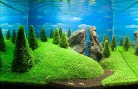 Fluval Edge Aquascape My Fluval Edge Interpretation