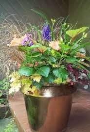 perennial gardening in containers perennial gardening