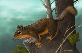 douglas squirrel by chuckrondeau on deviantart