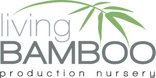 ornamental bamboos living bamboo brisbane bamboo plant nursery