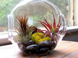 large glass terrarium with 2 open ends air plant supply co