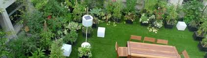 terrace gardening importance of terrace gardening in bangalore a beginner s guide