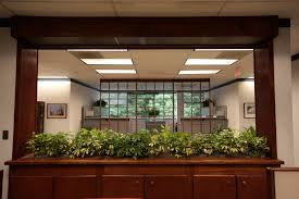 indoor plant hire improves office morale u2013 good for business