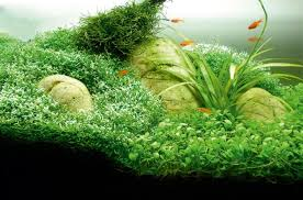 Plants For Aquascaping How To Aquascape Small Tanks U2014 Practical Fishkeeping Magazine