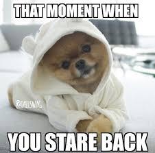 Pomeranian Meme - 16 tall girl memes you need to see tallswag