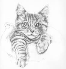 drawn kittens pretty cat pencil and in color drawn kittens
