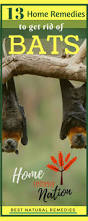 best 25 getting rid of bats ideas on pinterest arm flab how to