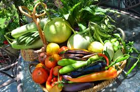 Kitchen Gardening Ideas Weeded Backyard Garden Vegetable Gardening And Top Vegetables