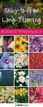 perennial garden vegetables 16 budget blooms you can depend on perennials gardens and