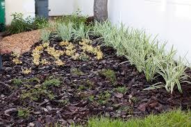 ideas central florida landscaping ideas inspiring garden and