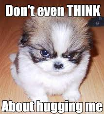Grumpy Face Meme - grumpy dog doesnt like hugs funny meme funny memes