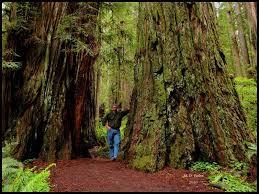 Oregon landscapes images Landscaping portland medford oregon m d vaden beaverton jpg