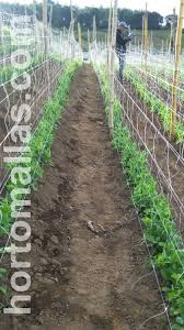 improving crop quality with net trellis systems