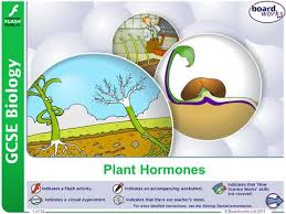 plant hormones can you explain what is happening click to reveal