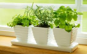Kitchen Window Shelf Ideas by Garden Increasing The Design Composition By Growing Herbs Indoor