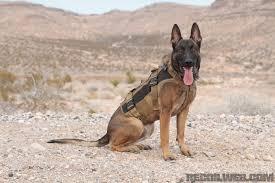 belgian shepherd k9 gear of the dog