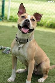 46 best aspca around the country images on pinterest country