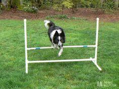 Backyard Agility Course Build Your Own Agility Jumps Super Easy Step By Step Diy