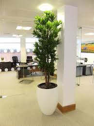 rent or buy artificial plants and trees for your business or