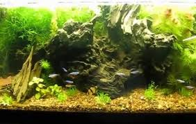 Aquascaping Guide Aquascaping For Beginners Getting The Basics Right U2013 The Fish Doctor