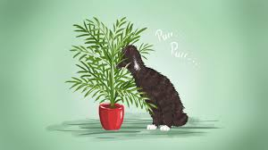 the best low maintenance pet friendly houseplants