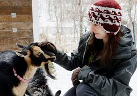Get Your Goat Rentals by Weed Eating Goats For Hire One Pittsburgh Woman Hopes To Turn