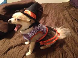 photos show off your pets in halloween costumes kfor com