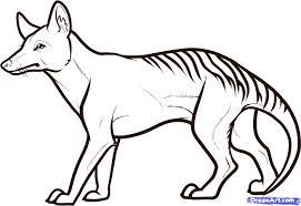 draw a tasmanian tiger tasmanian wolf step by step drawing