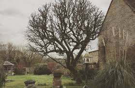 tree surgeon services tree and country care services