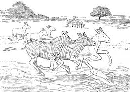 african animal coloring pages zebra animal coloring pages