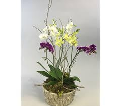 Orchid Flower Arrangements Orchids Salt Lake City Orchid Flower Arrangements Ut Romantic