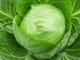 13 amazing benefits of cabbage organic facts