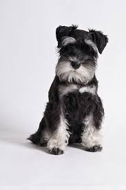 repulsif chien pour canapé magnifique repulsif chien canape meubles dogs breeds look here for