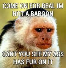 Baboon Meme - baboon ifunny