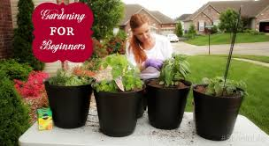 Vegetable Container Gardening Guide by Container Vegetable Gardening For Dummies Gardening Ideas