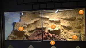 bearded dragon lighting guide bartl a bearded dragon and its 4 star habitat bearded dragons