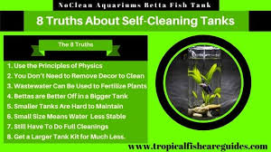 How To Clean Fish Tank Decorations Noclean Aquariums Betta Fish Tank 8 Truths About Gravity Flow