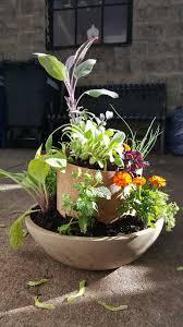 Table Top Herb Garden Urban Gardening Basics Getting Started U2014 We Generation