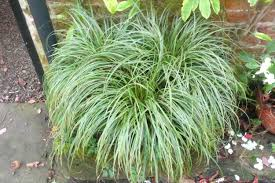 ornamental grasses stillingfleet lodge gardens