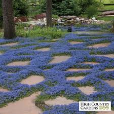 Backyard Ground Cover Options 104 Best Ground Covers Images On Pinterest Ground Covering