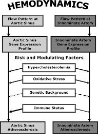 site specificity of atherosclerosis arteriosclerosis thrombosis