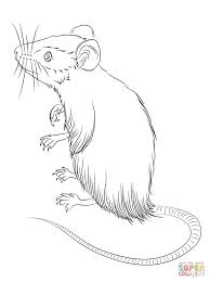 drawn mice deer mouse pencil and in color drawn mice deer mouse