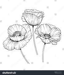 black white illustration poppy flowers stock vector 267816878