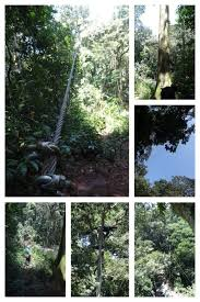 Above The Canopy by Our Ziplinning Experience 100ft Above The Mabira Forest Canopy And