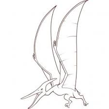 how to draw a pteranodon step by step dinosaurs animals free
