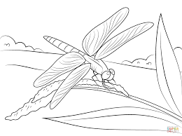 dragonfly sits on stem coloring page free printable coloring pages
